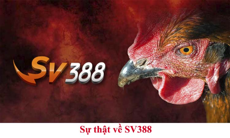 Sự thật về SV388